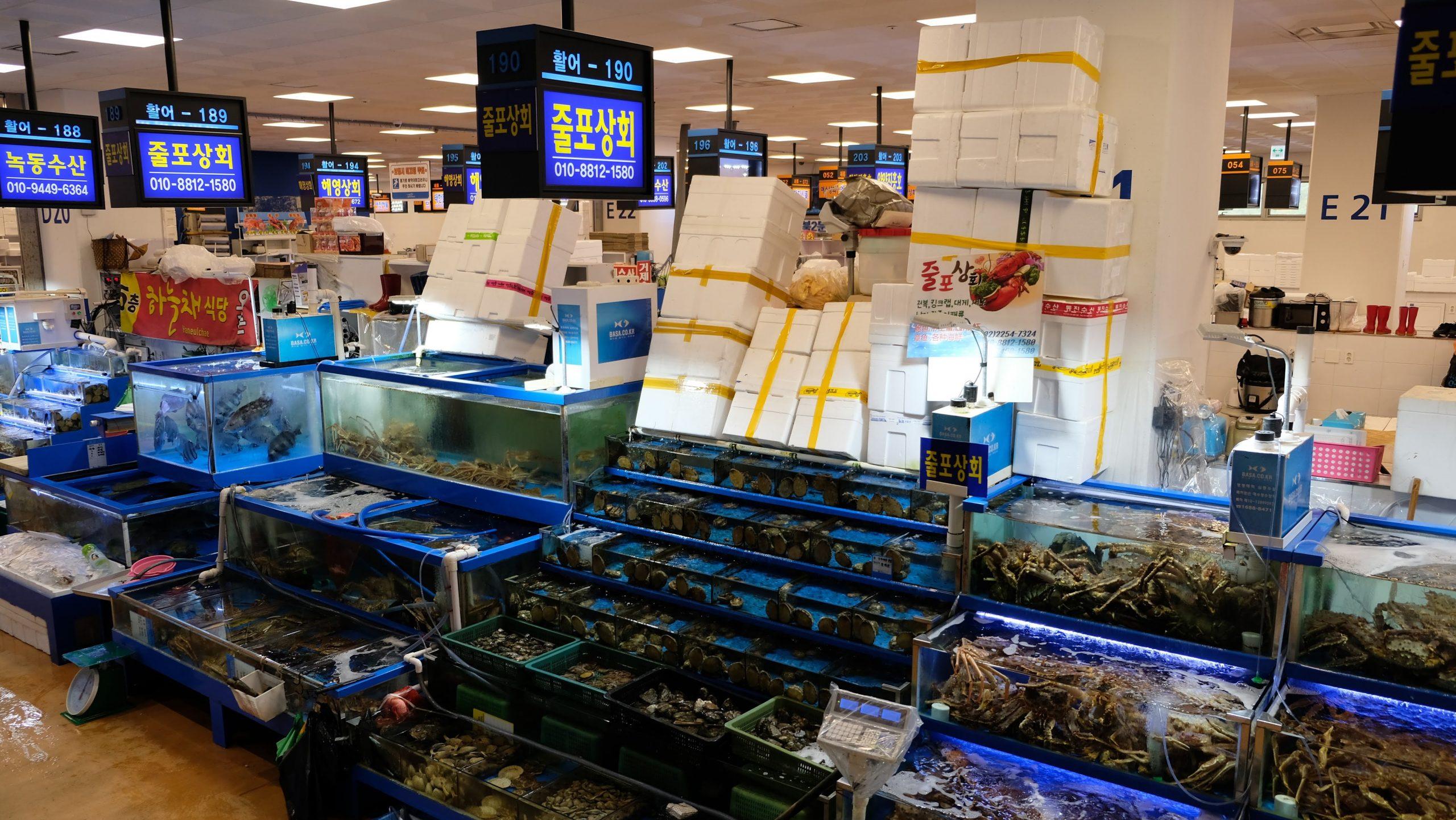[首爾] 鷺梁津水產市場:豪吃帝王蟹,挑戰生吃活章魚和意外小插曲